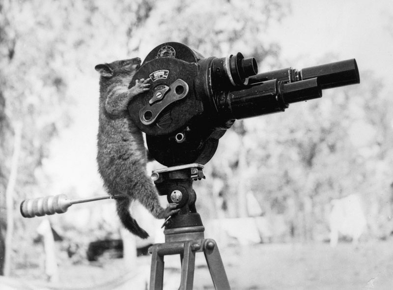 possum and a movie camera 1943 30 Photos to Celebrate Flickr Commons 5th Anniversary
