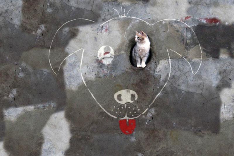 alexey menschikov street art (9)