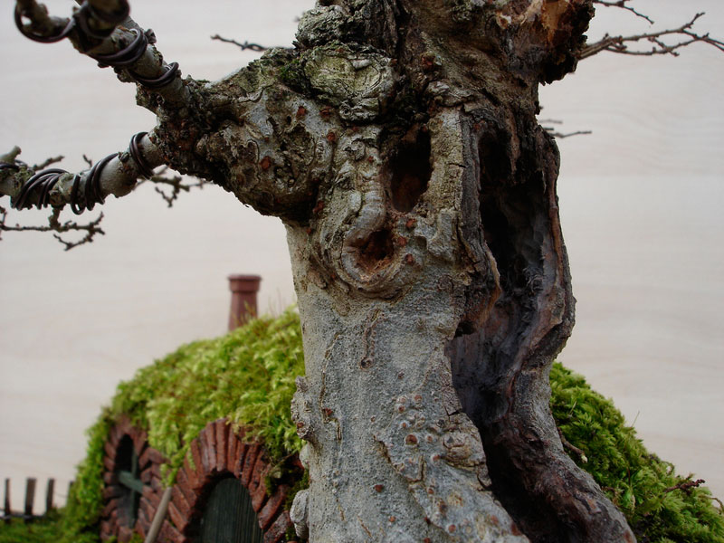 bonsai baggins hobbit home by chris guise (10)