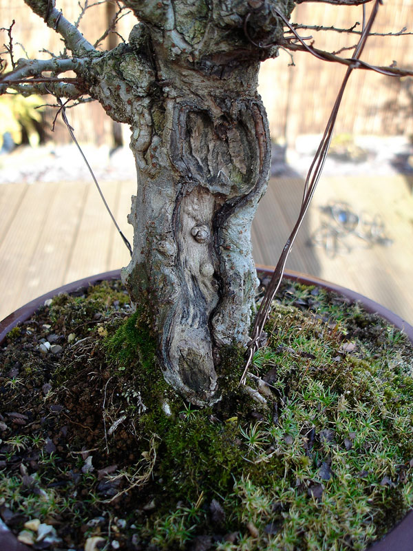 bonsai baggins hobbit home by chris guise (15)