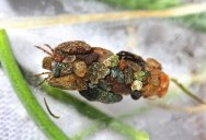 The Ornate Protective Cases of Caddisfly Larvae