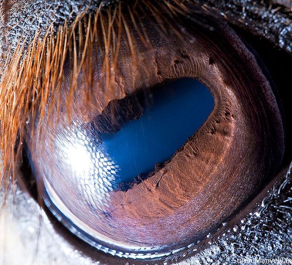 horse close up of eye macro suren manvelyan 10 Detailed Close Ups of Animal Eyes