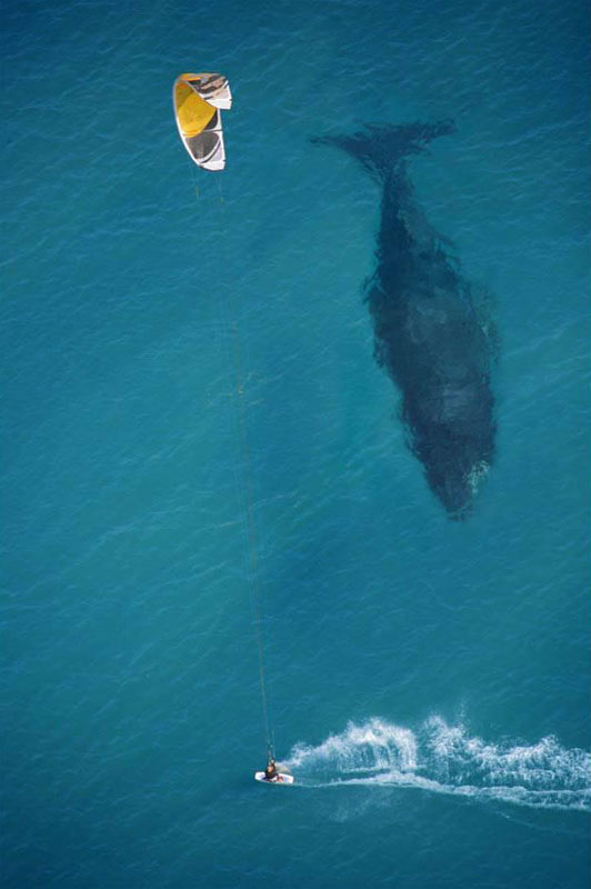 kite surfing with whale below aerial shot from above The 50 Most Perfectly Timed Photos Ever