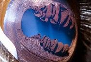 10 Detailed Close-Ups of Animal Eyes