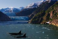 Picture of the Day: Orcas in Alaska