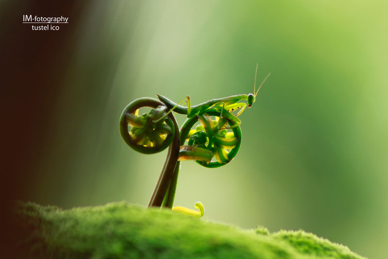 praying mantis bike