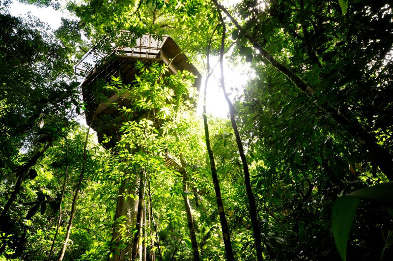 treehouse resort in costa rica finca bellavista (21)