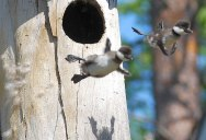 Picture of the Day: First Flight