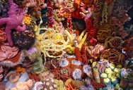 The Crochet Coral Reef Project [25 pics]