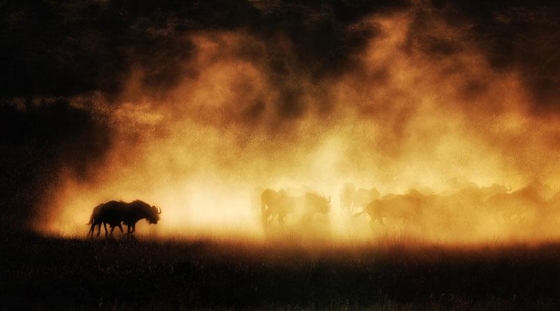 Shadows-in-dust