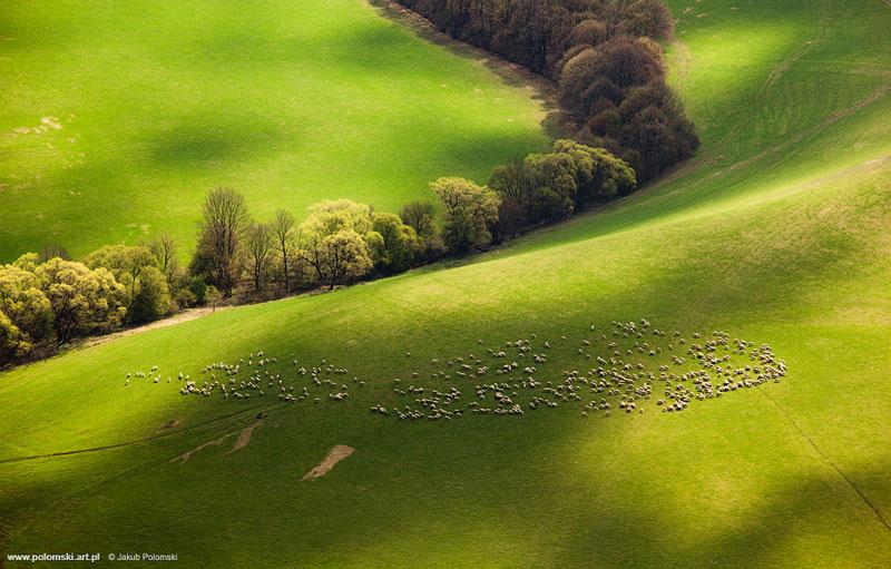 sheep-slovakia-aerial-jakub polomski