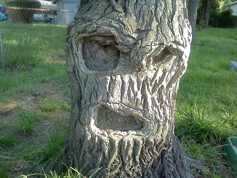 grumpy tree get off my lawn 50 Faces in Everyday Objects