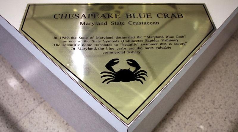 stained glass blue crab baltimore-washington international jackie leatherbury douglass callinectes douglassi (6)