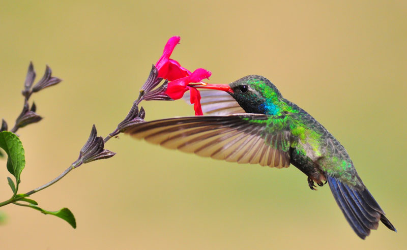 The-hummingbird-and-the-flower