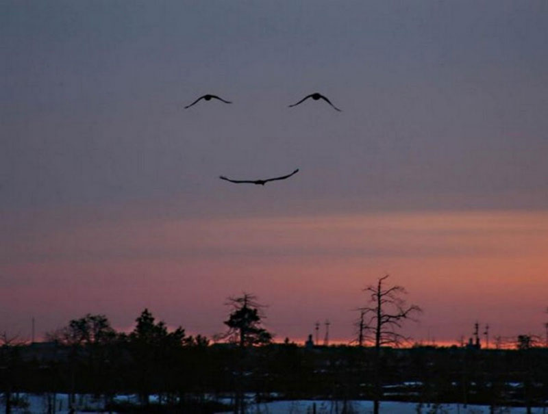 three birds make smiling face 50 Faces in Everyday Objects