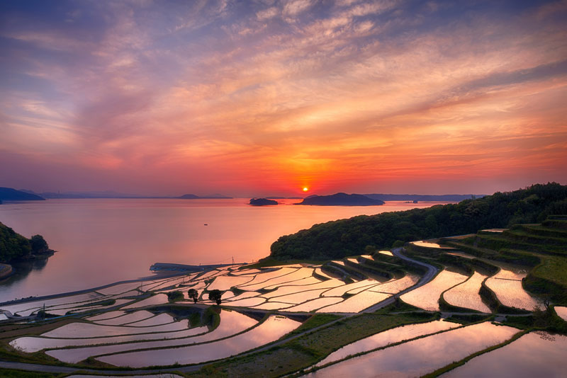 doya rice terrace sunset japan Picture of the Day: Rice Terrace Sunset
