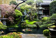 Picture of the Day: Backyard Garden in Japan