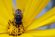 Detailed Macro Portraits of Insects