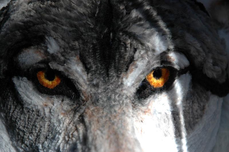 pipe cleaner wolf by lauren ryan (2)