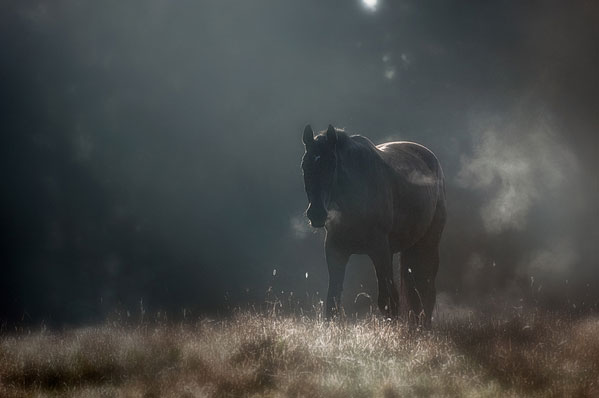portraits of solitude by Mikko Lagerstedt (3)