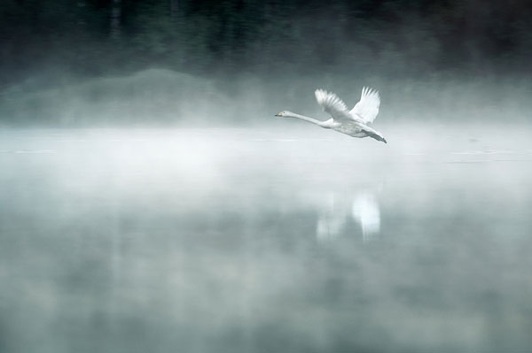 portraits of solitude by Mikko Lagerstedt (9)