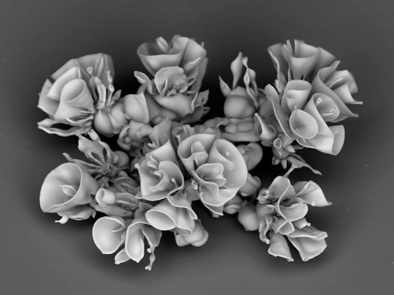 self-assembling nano flowers grown in lab (10)