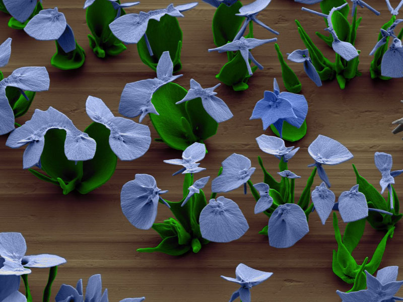 self-assembling nano flowers grown in lab (13)
