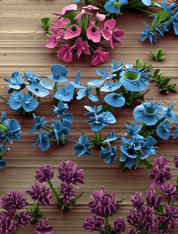 self-assembling nano flowers grown in lab (14)