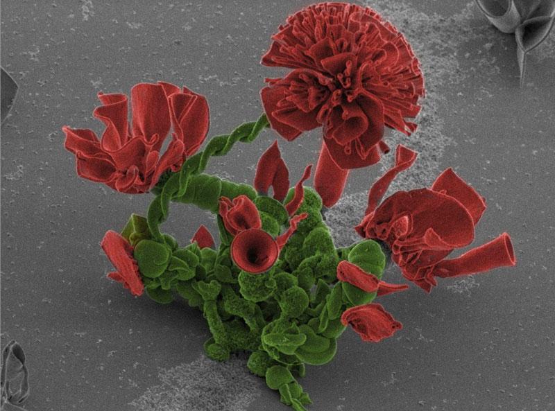 self-assembling nano flowers grown in lab (7)