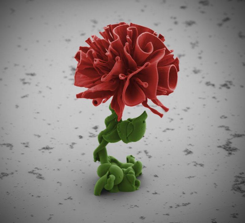 self-assembling nano flowers grown in lab (8)