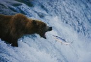 Celebrating 125 Years of National Geographic Photography
