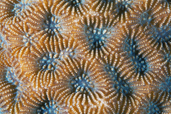 corals up close patterns alexander semenov (11)