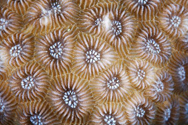 corals up close patterns alexander semenov (14)