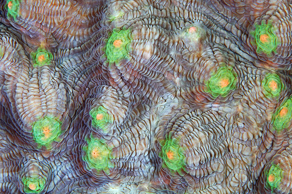corals up close patterns alexander semenov (2)