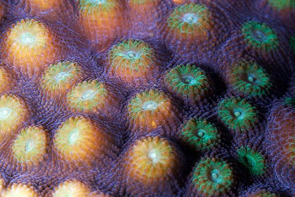 corals up close patterns alexander semenov (7)