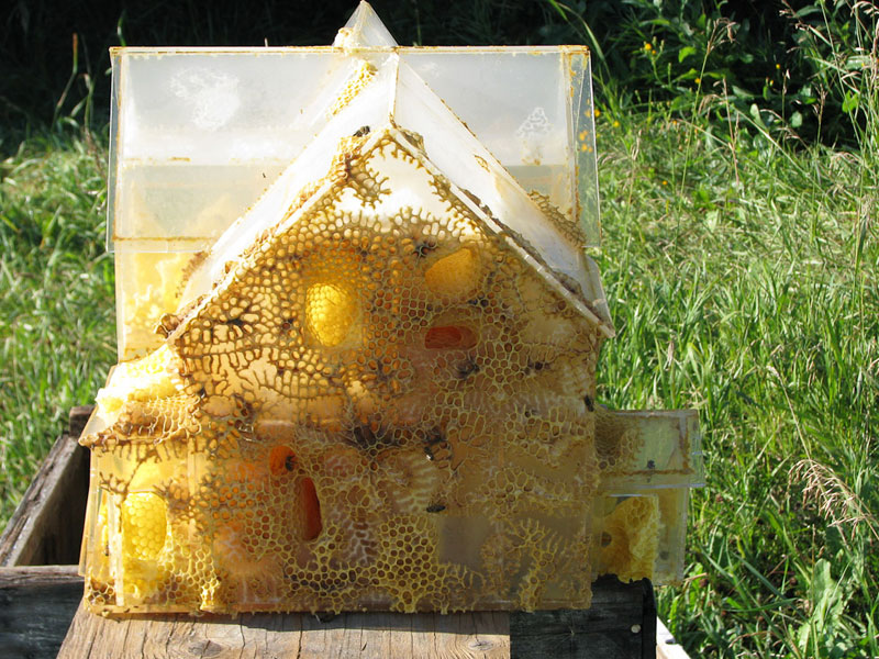 the-plexiglass-house-aganetha-dyck-bee-art-(1)
