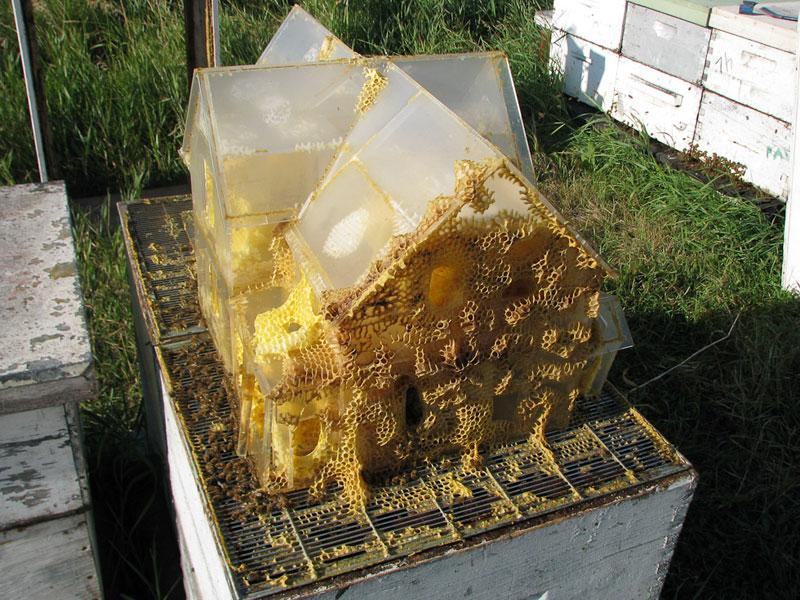 the-plexiglass-house-aganetha-dyck-bee-art-(2)