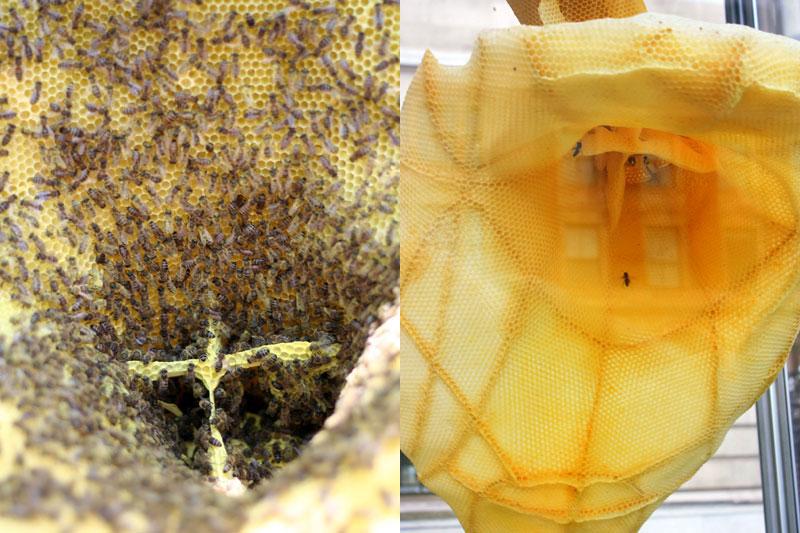 tomas libertiny the agreement beeswax sculpture (2)