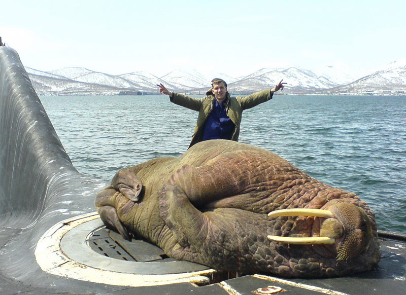 walrus on russian submarine The Shirk Report   Volume 224