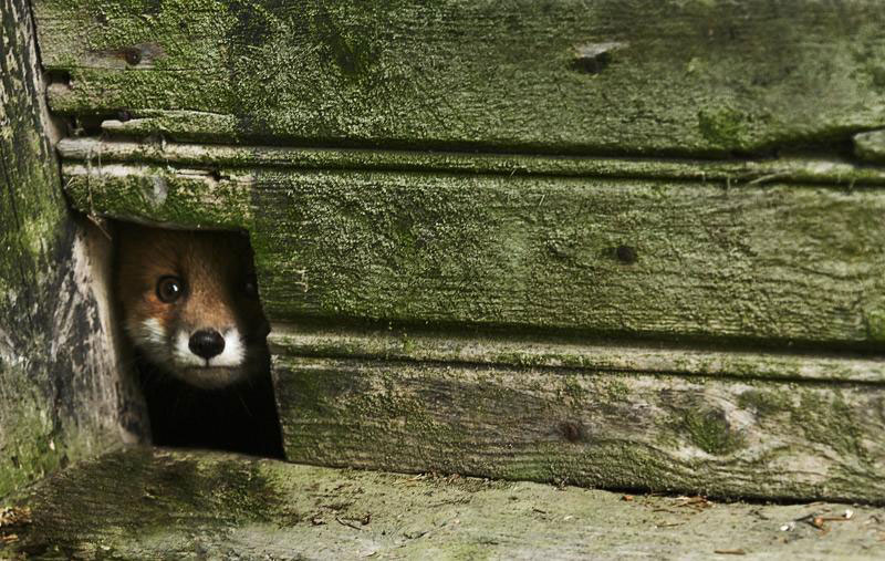 An Abandoned House Overtaken by Animals