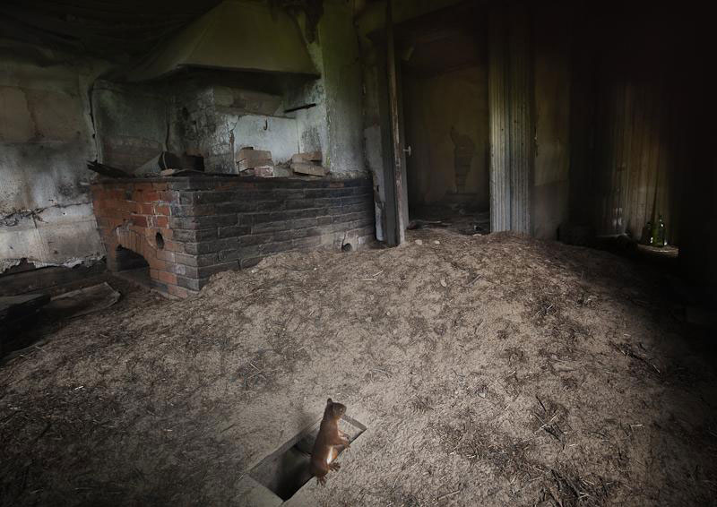 abandoned house in finland overtaken by animals kai fagerstrom (3)