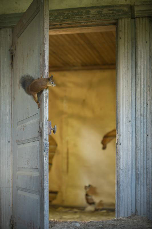 abandoned house in finland overtaken by animals kai fagerstrom (5)