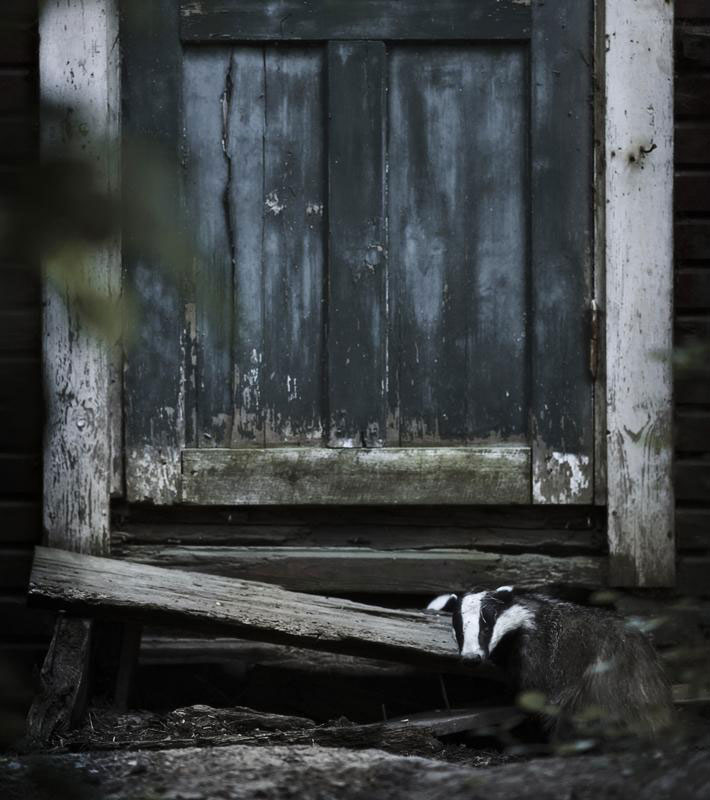 abandoned house in finland overtaken by animals kai fagerstrom (7)