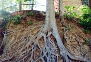 Picture of the Day: Tree Roots Exposed