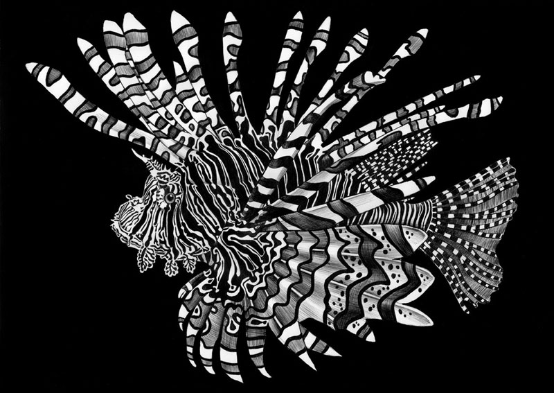 highly detailed pen and ink animal illustrations by tim jeffs (1)