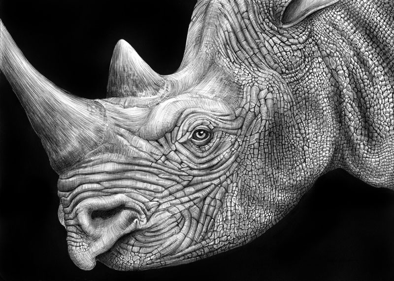 highly detailed pen and ink animal illustrations by tim jeffs 10 Incredibly Intricate Ink Illustrations by Alex Konahin