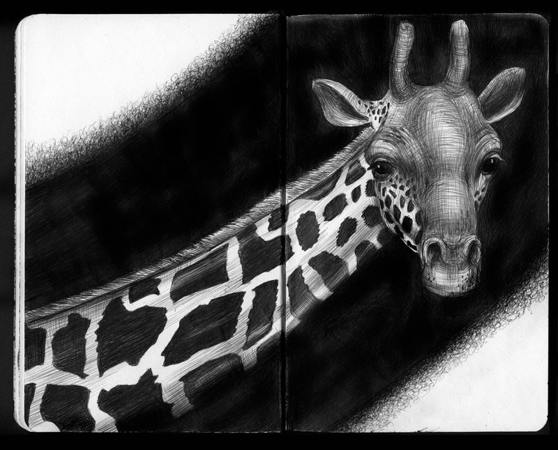 highly detailed pen and ink animal illustrations by tim jeffs (11)
