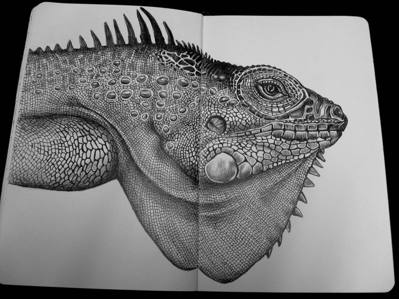 highly detailed pen and ink animal illustrations by tim jeffs (16)
