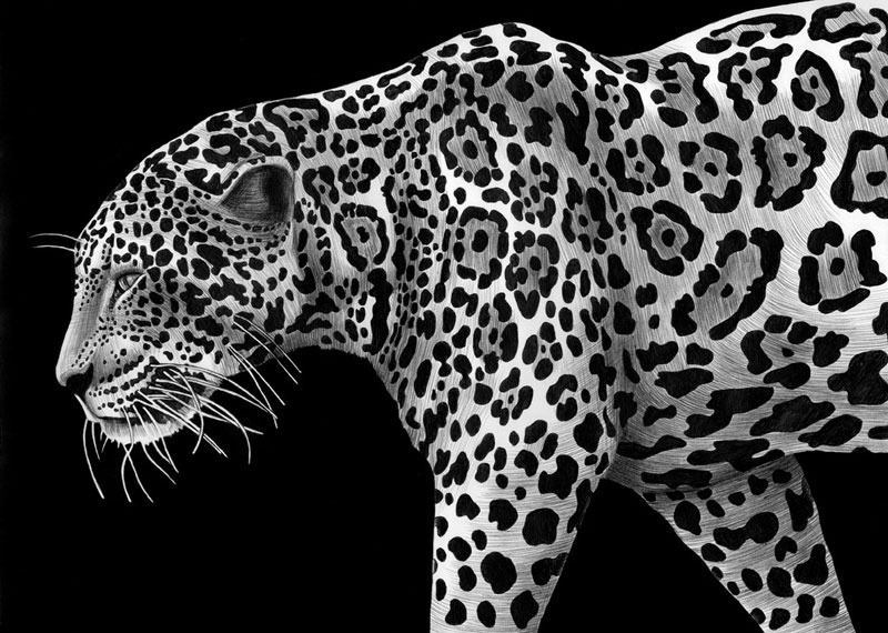 highly detailed pen and ink animal illustrations by tim jeffs (17)