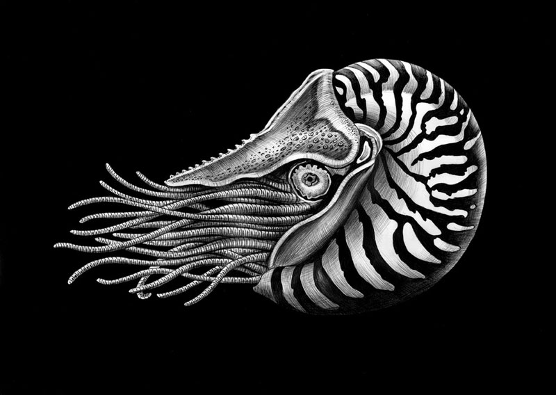 highly detailed pen and ink animal illustrations by tim jeffs (20)